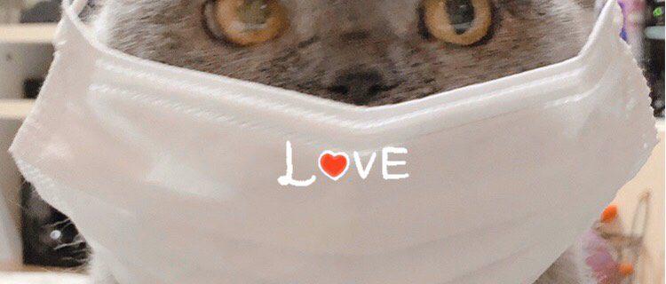 マスク猫よもちちゃんです。
